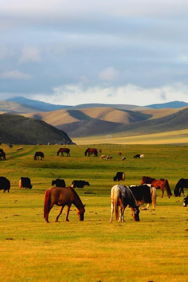 Scenery in Mongolia stock photo