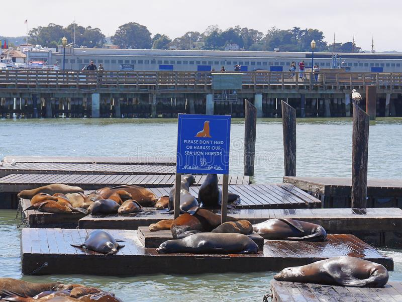 Scenery from Pier 39 with sea lions resting on wooden platforms royalty free stock photos