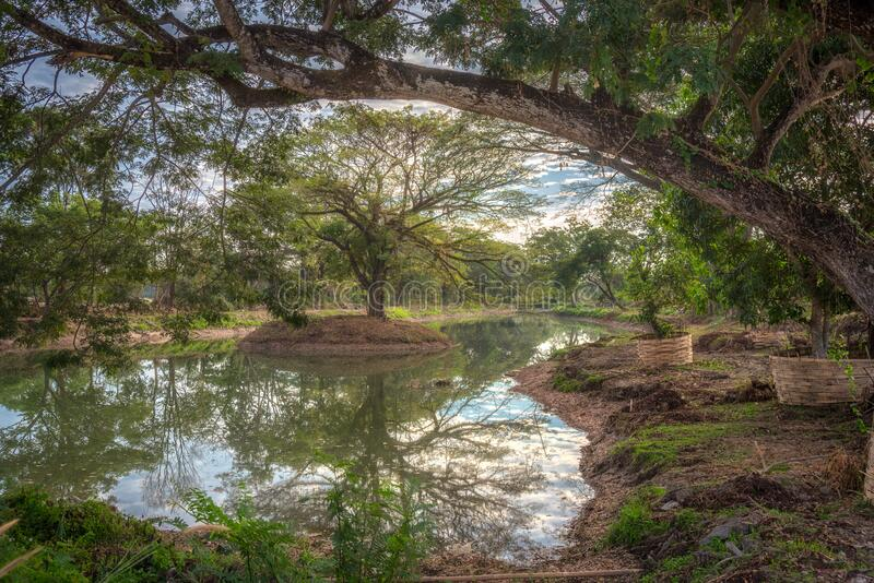The scenery of the reflection of the tree in Chiang Rai, Thailand.  stock photography