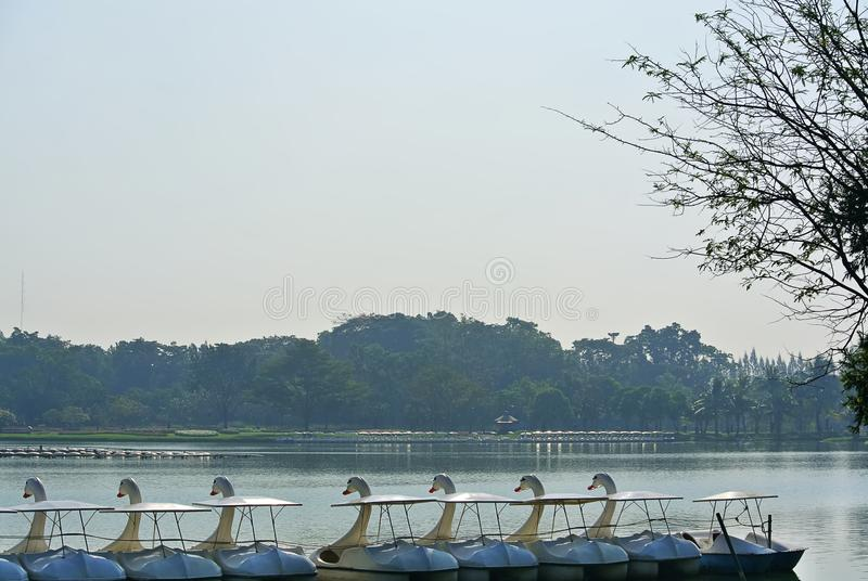 Scenery of Row of Swan Pedal Boats on the Lake. Tranquil Scenery of Row of Swan Pedal Boats on the Lake stock image