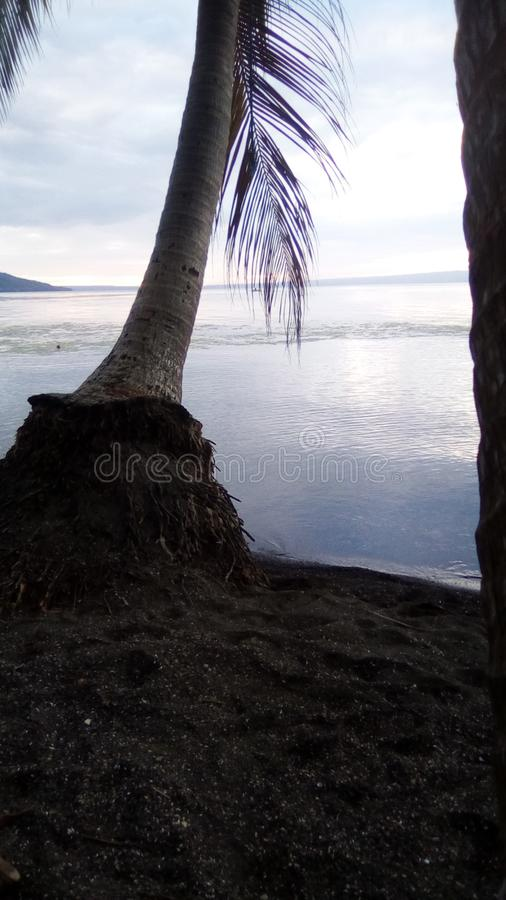 A scenery of sea and tree while sunset lr dawn time. Scenery sea atree sunset dawn stock photo