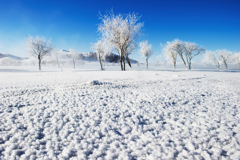 The scenery in the snow stock image