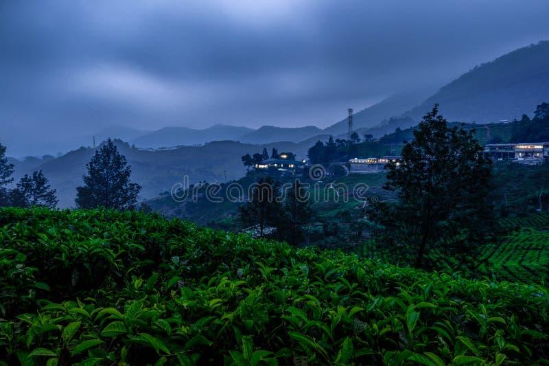 Scenery of tea plantation at night royalty free stock photo