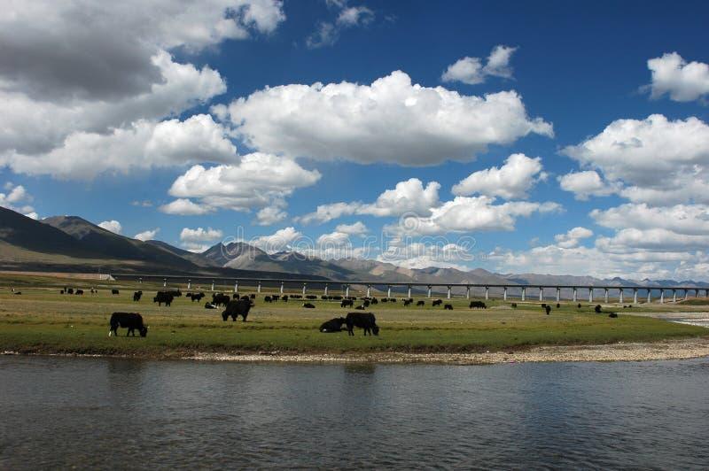 Download Scenery in Tibet stock image. Image of bridge, yaks, landscape - 12679445