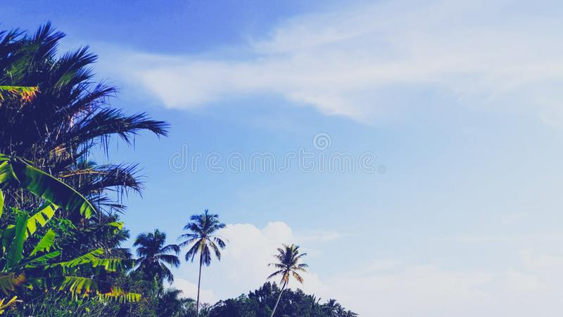 The scenery of the tree with a beautiful sky background. stock photography