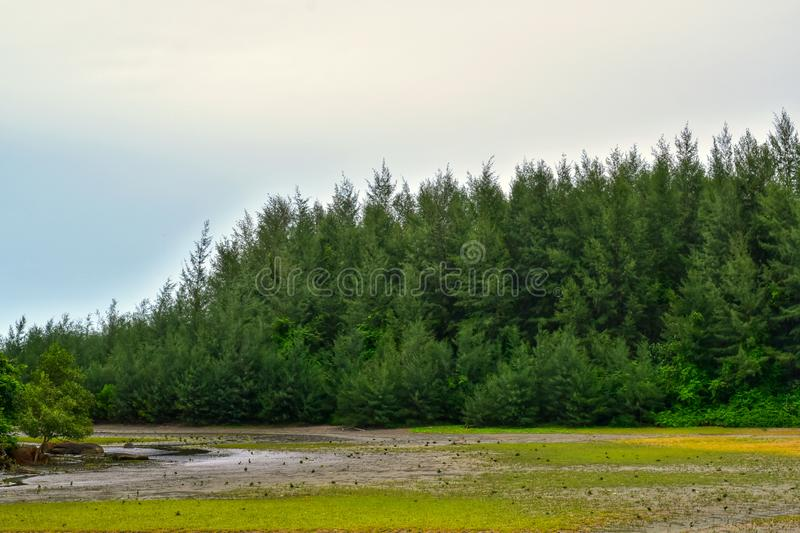 The scenery of the tropical mangrove forest in asia. royalty free stock image