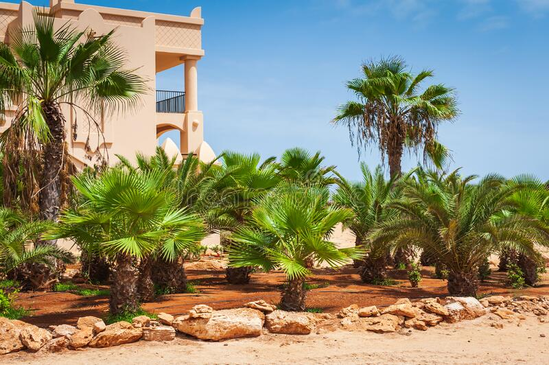 Tropical resort scenery. Scenery of tropical resort and green palms royalty free stock photography