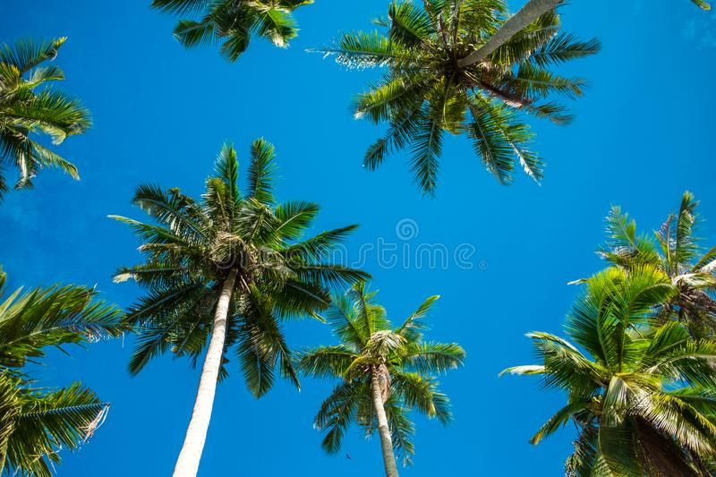 Scenery view tropical beach with palm tree and sky background. Scenery view tropical beach with palm tree and blue sky background royalty free stock image