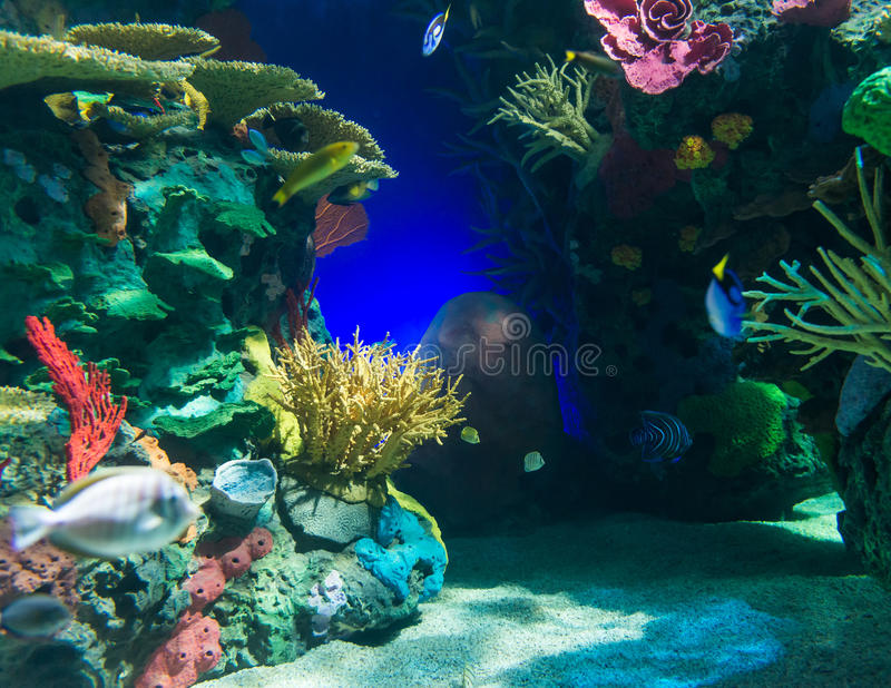Scenes of the coral reef. Coral reefs are underwater structures made from calcium carbonate secreted by corals. Coral reefs are colonies of tiny animals found in royalty free stock image