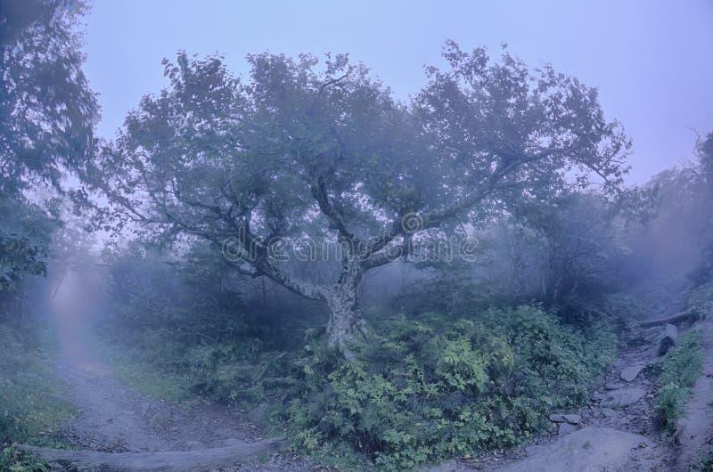 Sceni norte de Carolina Ridge Parkway Autumn NC dos jardins Craggy foto de stock royalty free