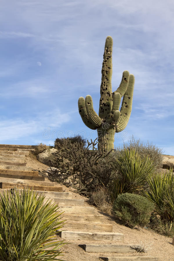 Free Scenic Arizona Desert Saguaro Cactus Landscape Stock Photos - 12735233
