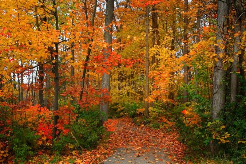 Scenic Autumn Walk Way royalty free stock image