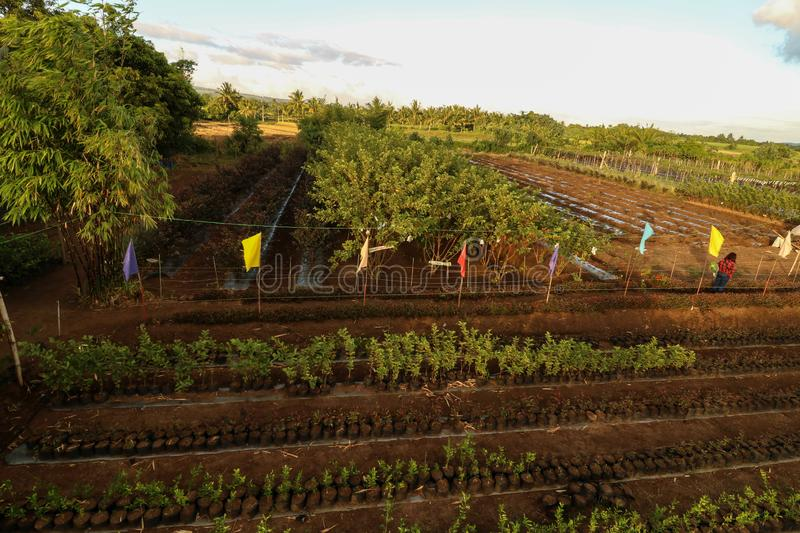 Strawberry farm in the Philippines. Scenic and beautiful strawberry farm as seen from above in Ocampo Camarines Sur Philippines stock image