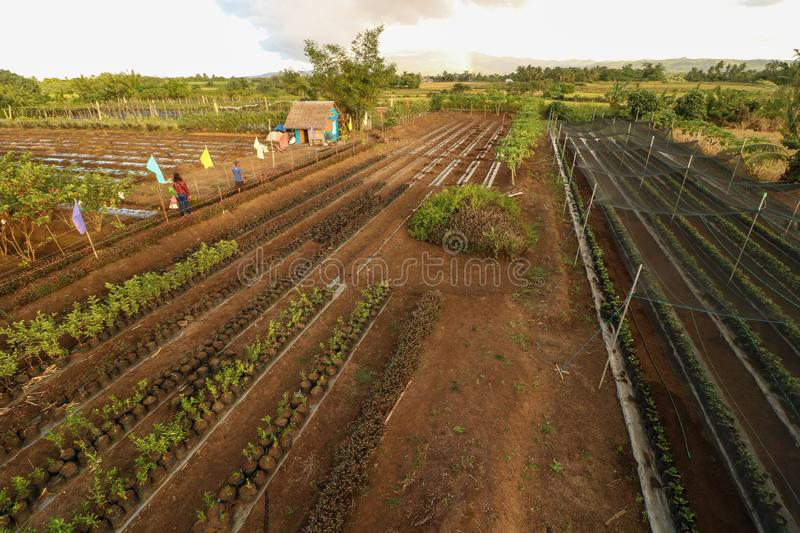 Strawberry farm in the Philippines. Scenic and beautiful strawberry farm as seen from above in Ocampo Camarines Sur Philippines stock photo