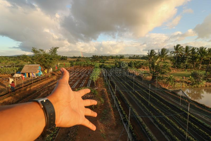 Strawberry farm in the Philippines. Scenic and beautiful strawberry farm presented by a hand in Ocampo Camarines Sur Philippines stock image