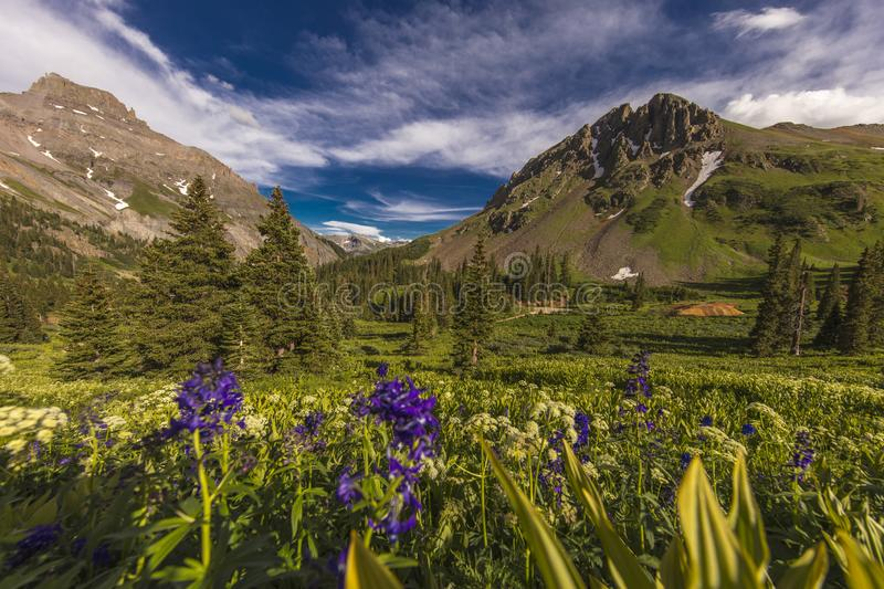 Scenic beauty in summer spring of wildflowers and mountains, Yankee Boy Basin, Ouray Colorado. 7/26/19 - OURAY COLORADO, USA - Scenic beauty in summer spring of royalty free stock images