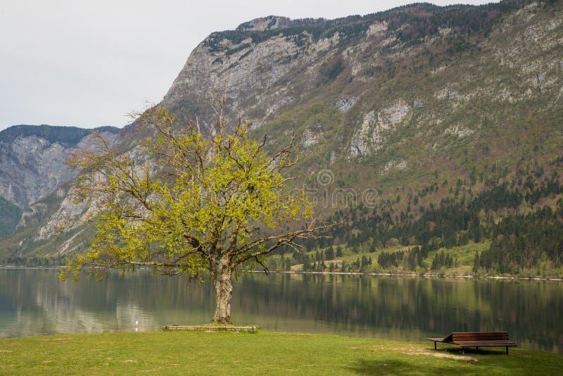 Scenic Bohinj lake with its green surroundings in Slovenia royalty free stock photo