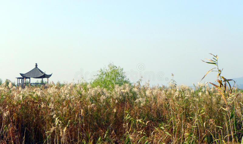 Scenic China wetland marshes nature park. A scenic landmark photograph showing the beautiful landscape scenery in one of China's newest nature park, the Xia Zhu royalty free stock photography