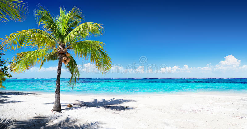 Scenic Coral Beach. With Palm Tree