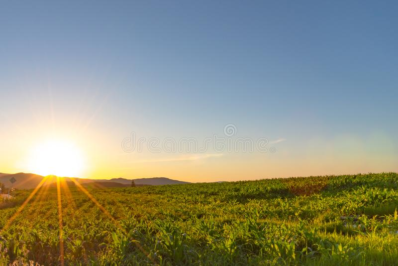 Scenic countryside sunset landscape with a plain wild grass field horizon view and a forest stock images