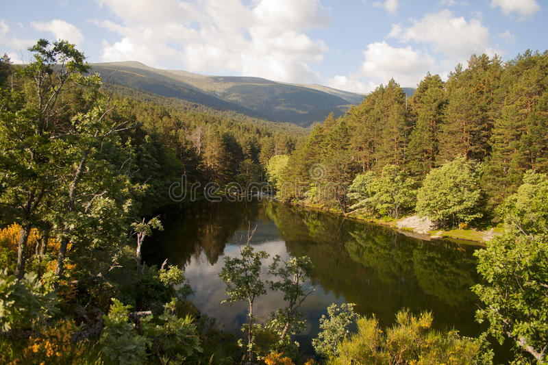Download Scenic Dam  Surrounded By Forest Stock Photo - Image of alpine, beautiful: 90703710