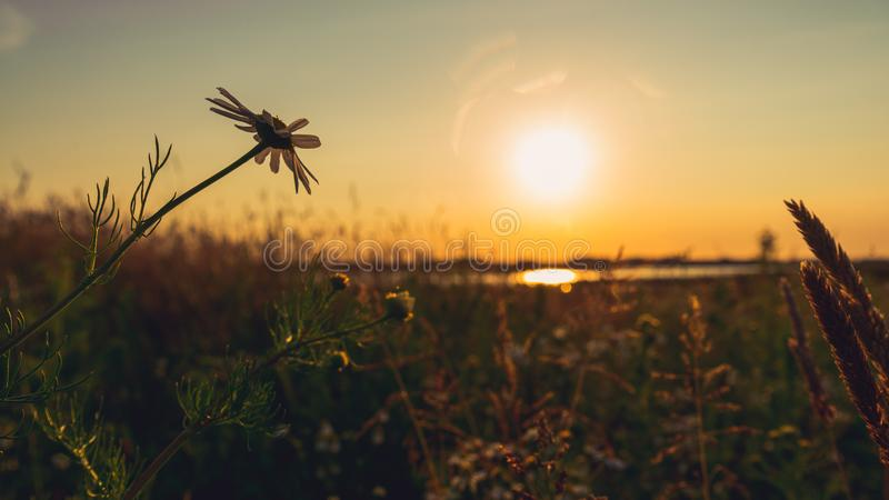 Scenic evening landscape of field before sunset stock images