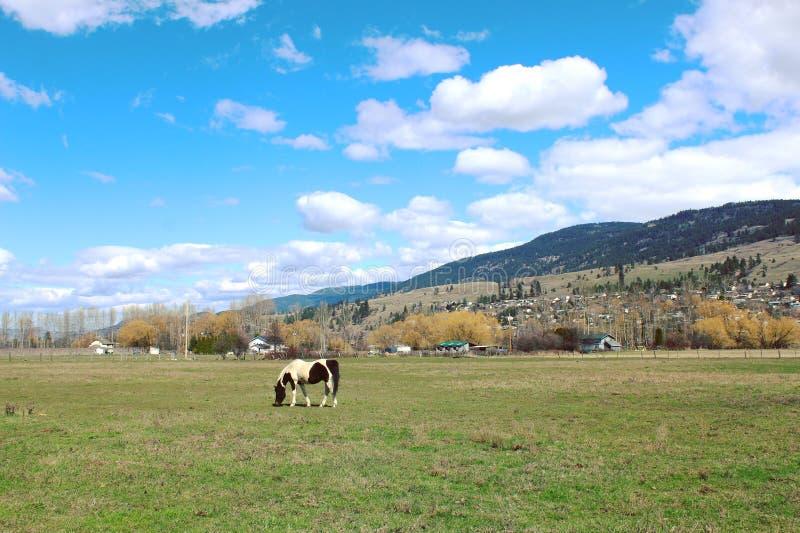 Scenic farm landscape with horse in field stock photo