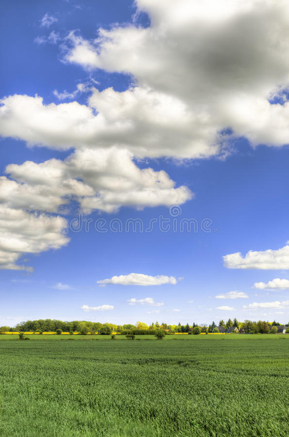 Scenic field with blue sky - HDR