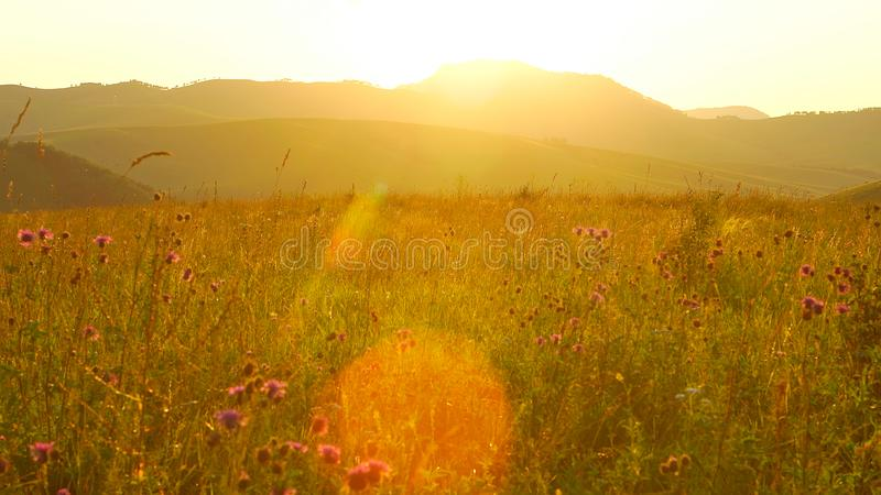 Scenic field with wildflowers is on a sunset in Altay, Russia. Scenic field with wildflowers is on a sunset royalty free stock photo