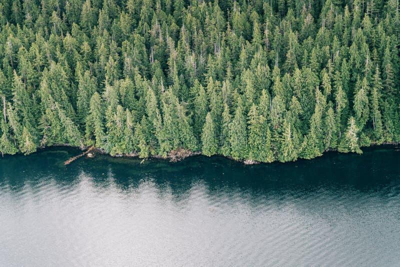 Scenic flight above Tofino Harbour, Vancouver Island. British Columbia, Canada. Tofino Harbour, Vancouver Island. British Columbia, Canada. Scenic seaplane royalty free stock image