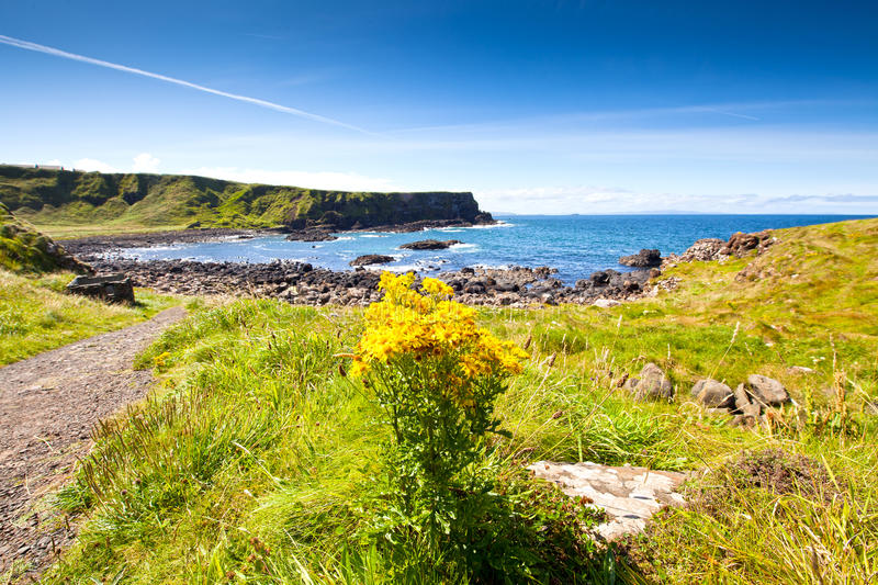 Scenic Footpath. Giant's Causeway. royalty free stock photography