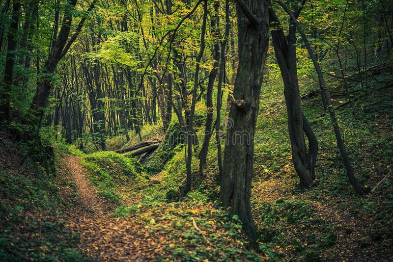 Scenic Forest Creek. In Summer. Forestry Landscape stock photography