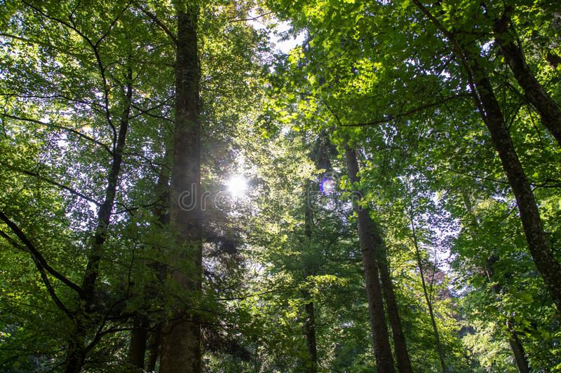 Scenic forest of fresh green deciduous trees framed by leaves, with the sun casting its warm rays stock image
