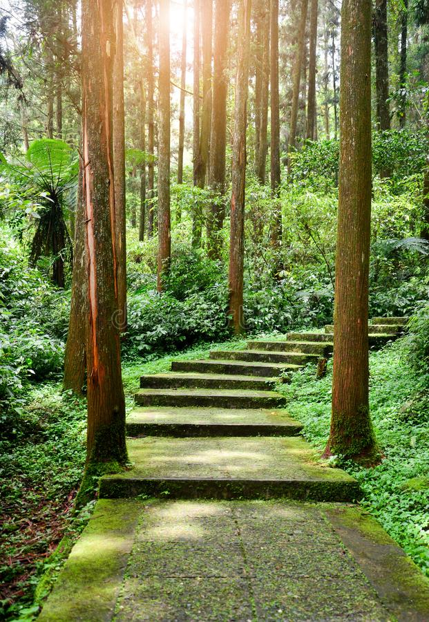 Scenic forest landscape, entrance to the forest, green moss and lichen covered on curve stairway in the tropical jungle stock photography