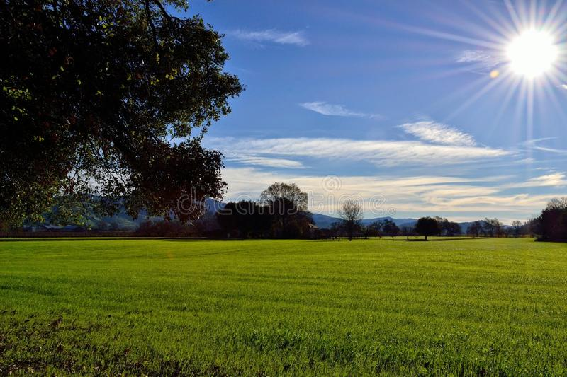 Scenic grassing field with sun royalty free stock photography