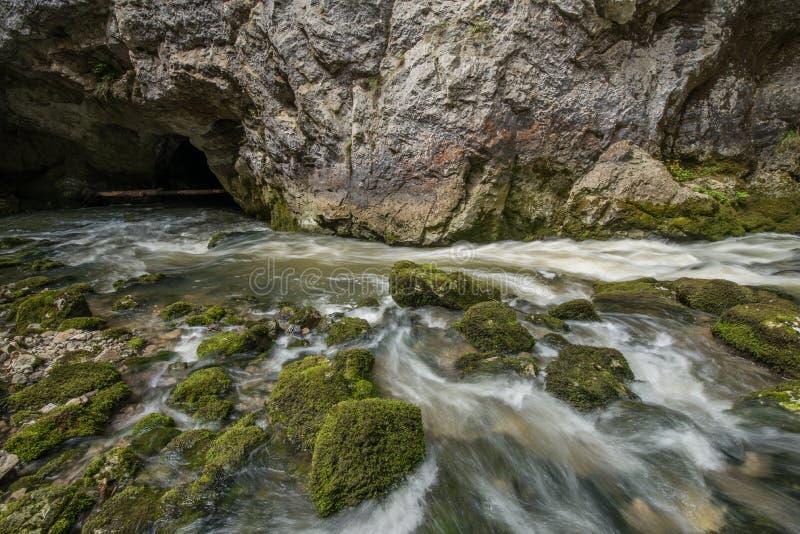 Scenic karst river Rak dissapearing in the cave system in national park Rakov Skocjan in Slovenia. Scenic karst river Rak dissapearing in the cave system in royalty free stock image