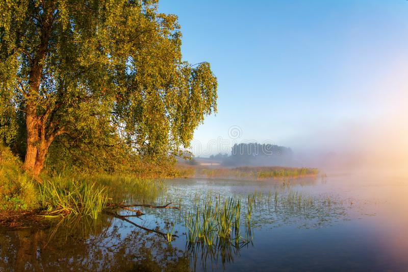 Scenic lake landscape at misty sunrise stock photography