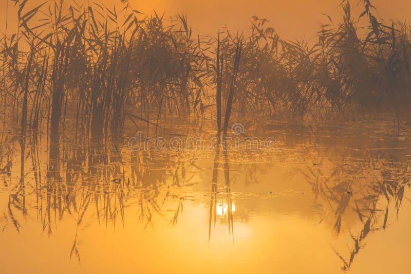 Scenic lake sunrise wallpaper, orange light of dawn royalty free stock photography