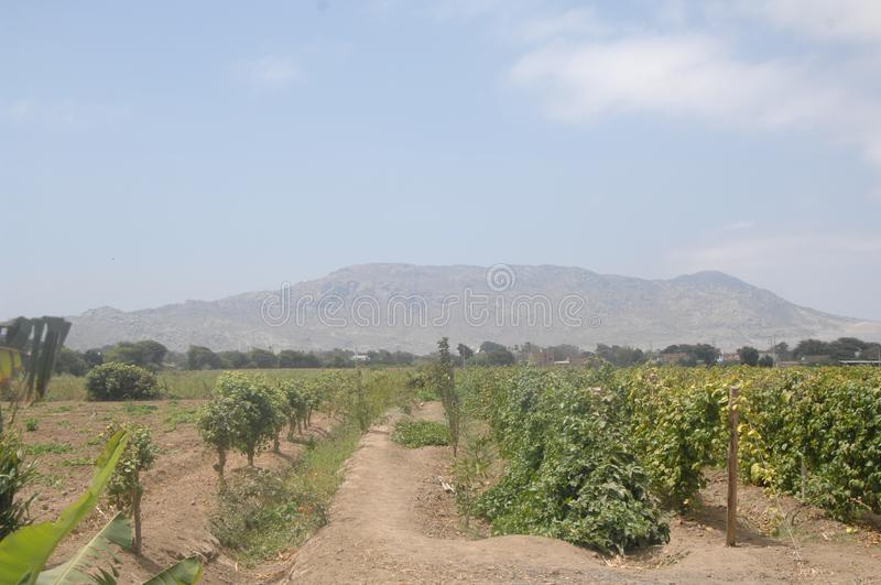 Scenic Landscape Of Agricultural Crops In Reque Peru With Mountains In the Background royalty free stock photo
