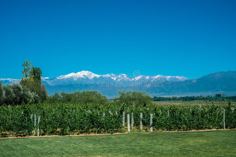 Scenic Landscape with Andes Mountains with Snow and Vineyard on. The foreground in Mendoza, Argentina royalty free stock image