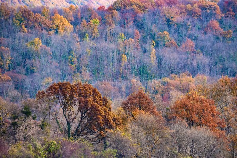 Scenic landscape of autumn forest in mountains stock photos