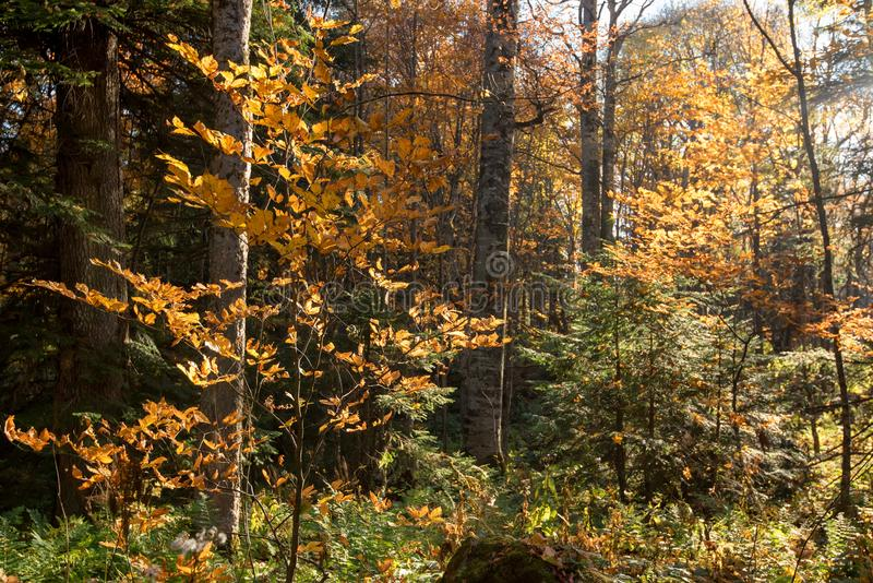 Scenic landscape of beautiful sunlit autumn forest royalty free stock photography