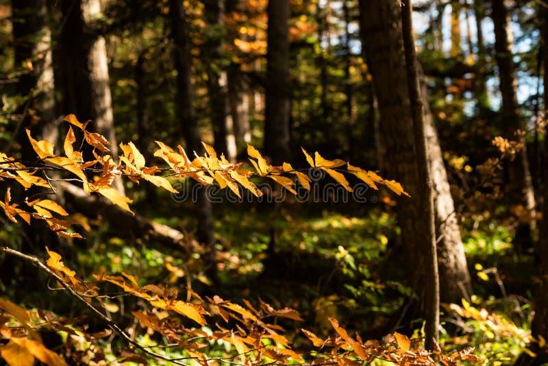 Scenic landscape of beautiful sunlit autumn forest stock images