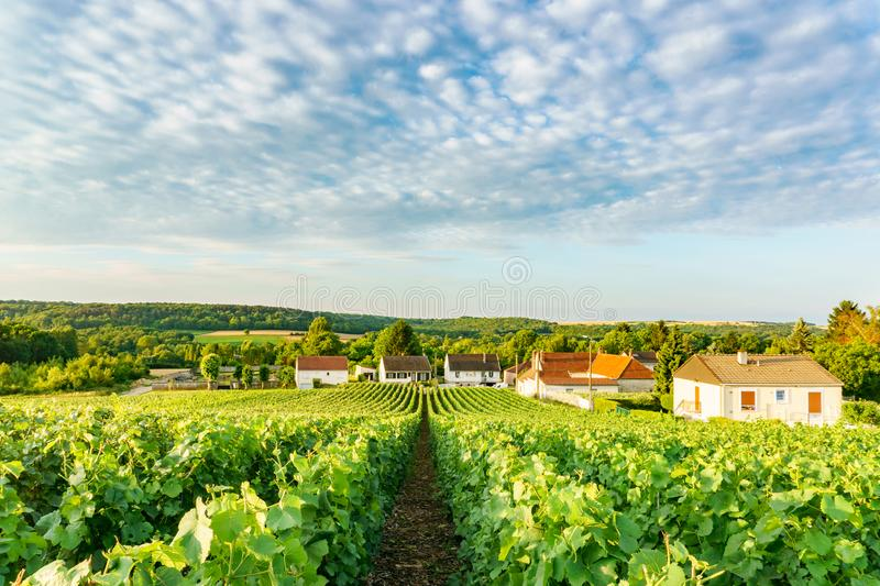 Scenic landscape in the Champagne, Vineyards in the Montagne de Reims royalty free stock photos