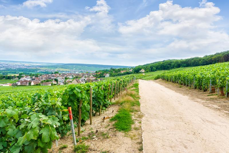 Scenic landscape in the Champagne, Vineyards in the Montagne de Reims stock photo