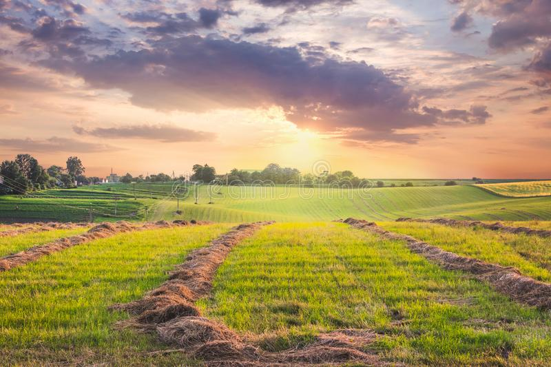 Scenic landscape:  field with beveled grass at sunset. Clouds during the sunset over the field with hay _. Scenic landscape:  field with beveled grass at sunset royalty free stock photography