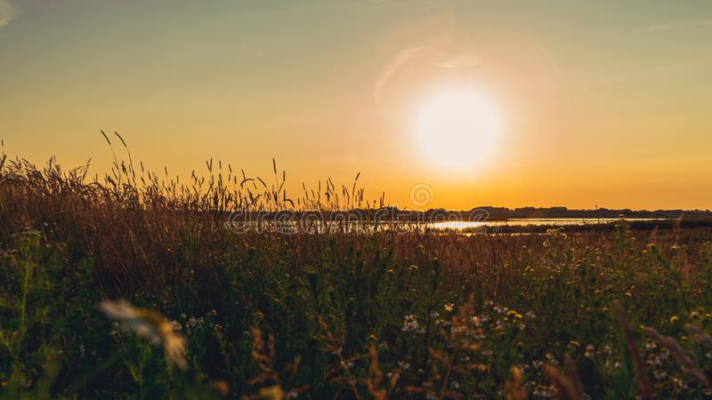 Scenic landscape of field in the evening light, before sunset. The Netherlands countryside royalty free stock images