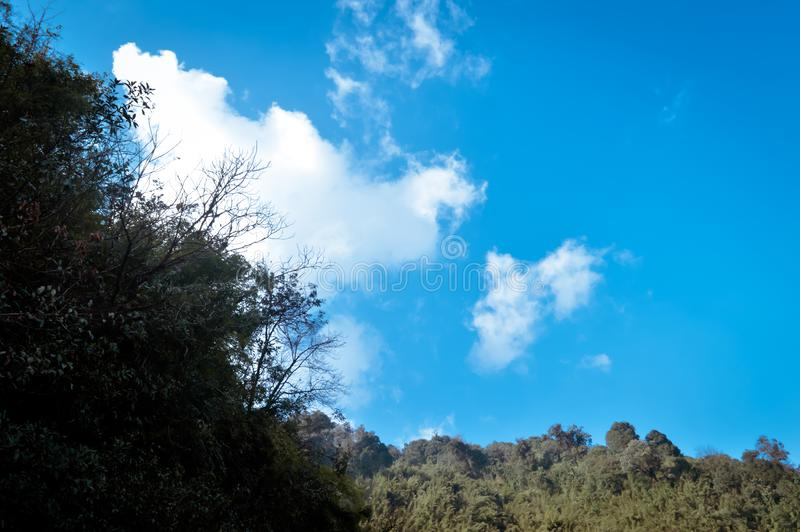 A scenic landscape of Forest himalayan mountain slope in low lying cloud with evergreen conifers tree. Blue sky. Dreamy landscape stock photography