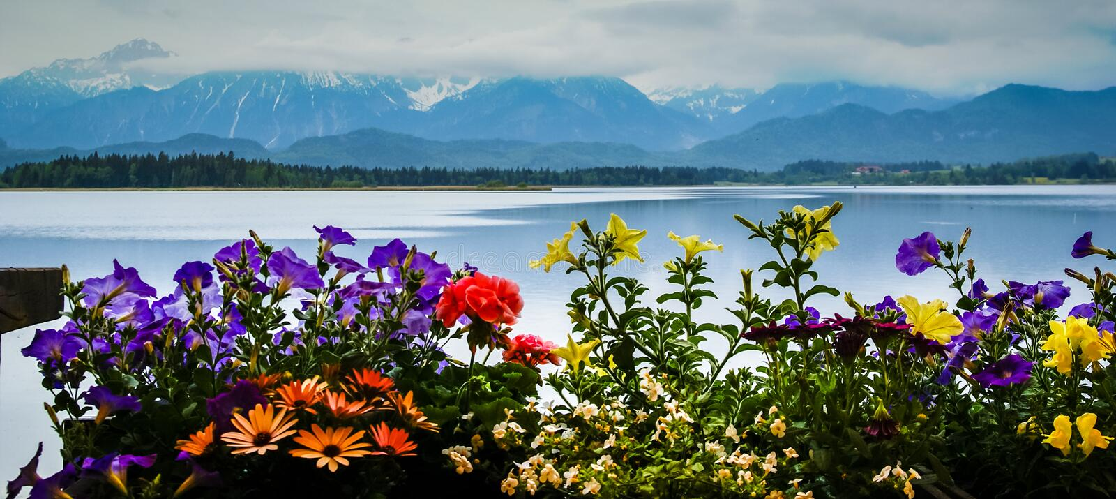 Scenic landscape with lake and flowers in Bavaria stock images