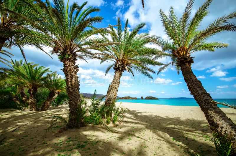 Scenic landscape of palm trees, turquoise water and tropical beach, Vai, Crete. Scenic landscape of palm trees, turquoise water and tropical beach, Vai, Crete royalty free stock image